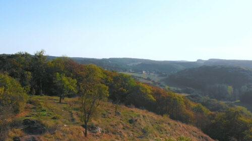 Un massif forestier digne des Ardennes juste à côté de chez nous