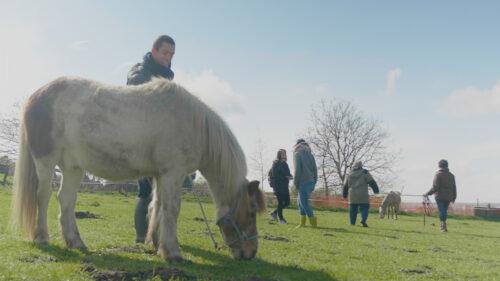 Guérir à l'aide des chevaux