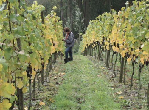À la rencontre de ces vignerons locaux